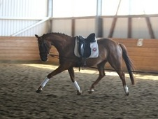 **sold**gorgeous Young Broodmare State Premium Beltana