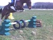 All Rounder horse - 6 yrs 10 mths 15.0 hh Coloured - Shropshire