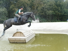Eventer / Showjumper / All Rounder