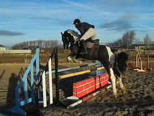 Competion / Riding Club Horse BASED IN CHESHIRE