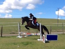 Free loan - small lightweight rider wanted (no novices sorry)