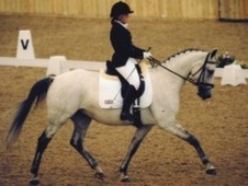 Dressage horse - 14 yrs 16.1 hh Grey - West Midlands