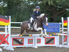 Super 14. 3hh, Allround Family Horse.