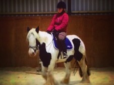 4yr old gypsy cob mare for sale