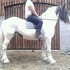 16.1 family cob happy hacker £3000 ovno