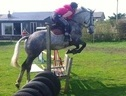 All Rounder horse - 5 yrs 15.1 hh Dapple Grey - Cheshire