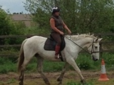 All Rounder horse - 10 yrs 6 mths 15.3 hh Grey - Lincolnshire