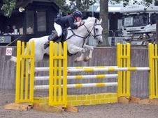 Show Jumpers horse - 10 yrs 15.3 hh Grey - East Sussex