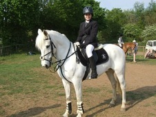 Very special 14. 2 gelding for sale
