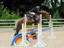 All Rounder horse - 14 yrs 13.1 hh Dun - Cambridgeshire
