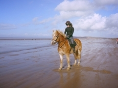 Purebred Haflinger, A real headturner in all aspects of equestrian life