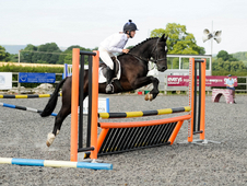 **gorgeous And Very Talented 13. 2hh Pony!!**