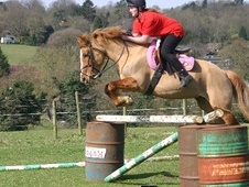 Pony Club Ponies horse - 12 yrs 14.0 hh Chestnut - Hertfordshire