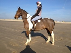 All Rounder horse - 7 yrs 15.0 hh Coloured - Kent