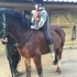 Potential Allround Welsh Section D Gelding