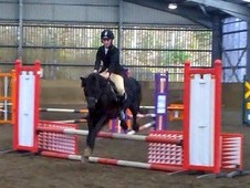 ****13hh reg sec c gelding 7yrs potential whp/mm*****