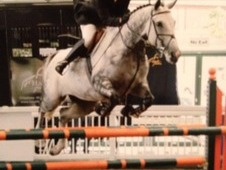 16. 1hds Competition Mare For Sale