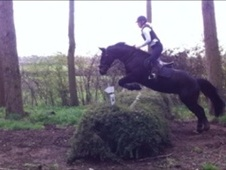 All Rounder horse - 16 yrs 15.1 hh Dark Bay - Norfolk