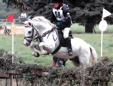 Hunting And Pony Club Pony