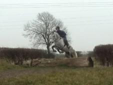 All Rounder horse - 9 yrs 14.2 hh Grey - Nottinghamshire