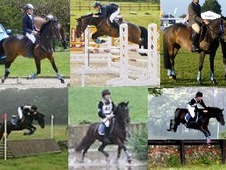 The Perfect Pony - Can Be Seen At Bicton 22-24 Aug