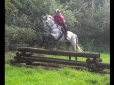 All Rounder horse - 9 yrs 2 mths 16.0 hh Grey - Gloucestershire