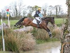Irish Sports Horse, Bay, Gelding, 14 Years, 16. 2 Hands