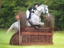 Eventers horse - 6 yrs 16.3 hh Grey - North Yorkshire