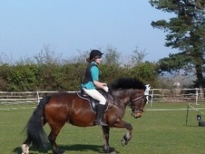 All Rounder horse - 10 yrs 4 mths 14.3 hh Bay - Bedfordshire