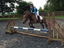 13. 1hh 6 Year Old Jumping Pony