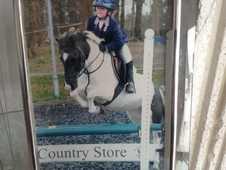 2ND pony / 1ST competition pony