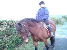 Tiggy- beautiful bay section d mare 8 yrs old
