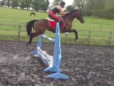 All Rounder horse - 6 yrs 14.1 hh Bay - Suffolk