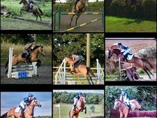 14hh mare for sale