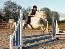 Family horse - 15 yrs 14.2 hh Grey - Cheshire