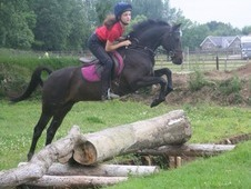 133 Cm Working Hunter Pony