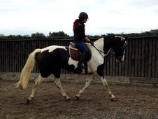 Huge potential. 5 year old coloured gelding ready to progress