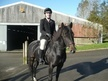 All Rounder horse - 5 yrs 14.1 hh Bay - Devon