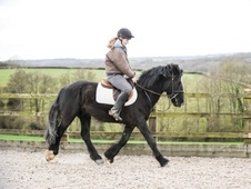 All Rounder horse - 5 yrs 15.0 hh Black - East Sussex