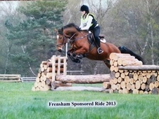 All Rounder horse - 7 yrs 3 mths 15.0 hh Bright Bay - Surrey