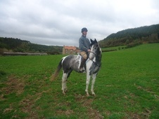 All Rounder horse - 3 yrs 11 mths 16.0 hh Blue & White - North Yo...