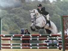 All Rounder horse - 14 yrs 10 mths 14.2 hh Fleabitten Grey - Warw...
