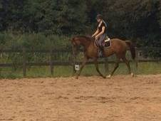 Striking 15. 2hh Chestnut Mare