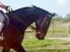 All Rounder horse - 7 yrs 17.0 hh Bay - Cheshire