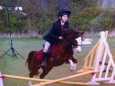 Mountain & Moorland horse - 17 yrs 13.2 hh Chestnut - Derbyshire