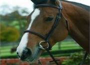 Mark Todd Plain Raised Bridle  - UK