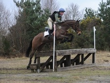 All Rounder horse - 7 yrs 4 mths 16.1 hh Bay - Kent