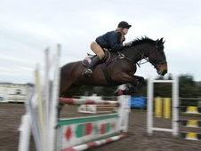 All Rounder horse - 9 yrs 16.1 hh Bay - Devon