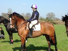 BRIGHT BAY 15. 1HH 9YO HUNTER GELDING