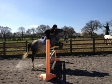 All Rounder horse - 6 yrs 2 mths 14.2 hh Grey - West Sussex